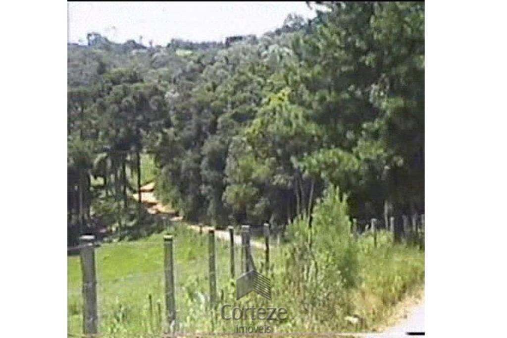 Área rural em Tijucas do Sul com 6 alqueires