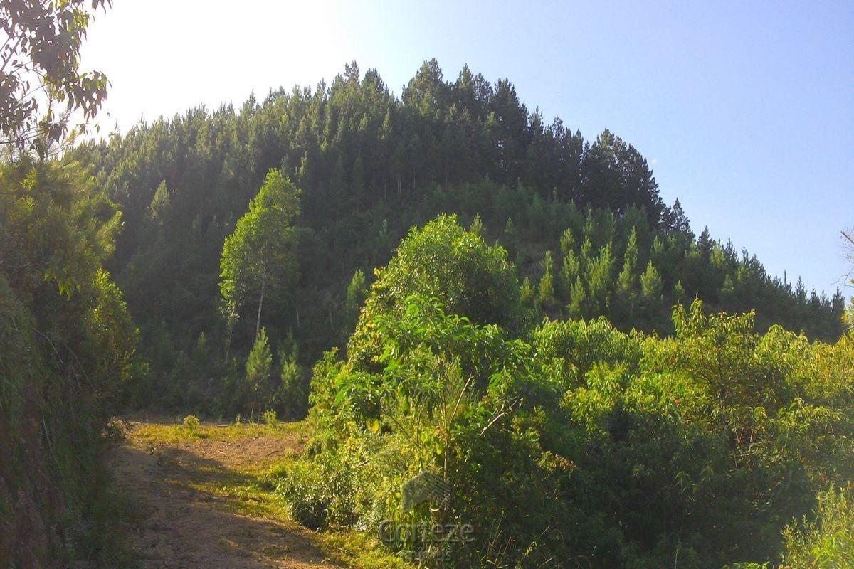 Fazenda para plantio de pinos em Cerro Azul